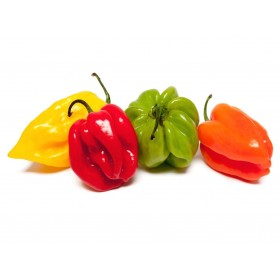 PIMENT ANTILLAIS 100G